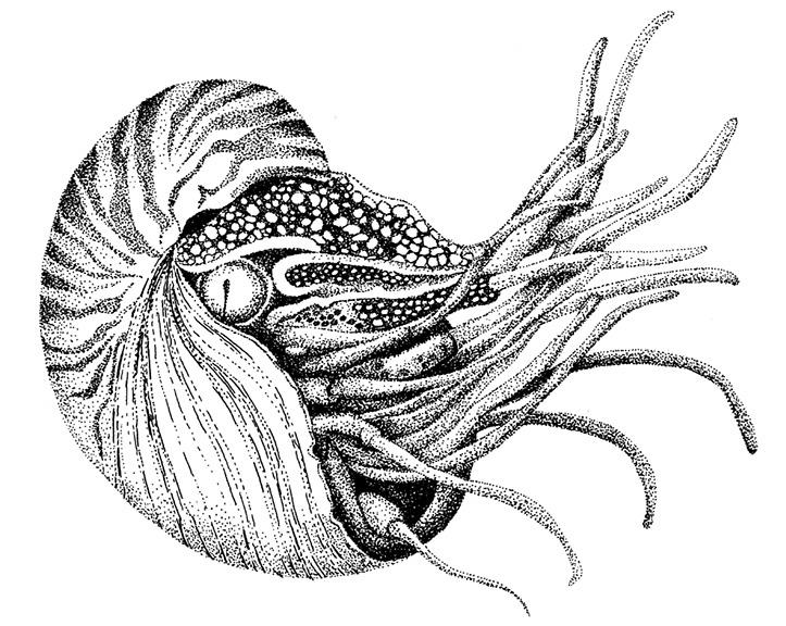 1_BW_Nautilus_Handink