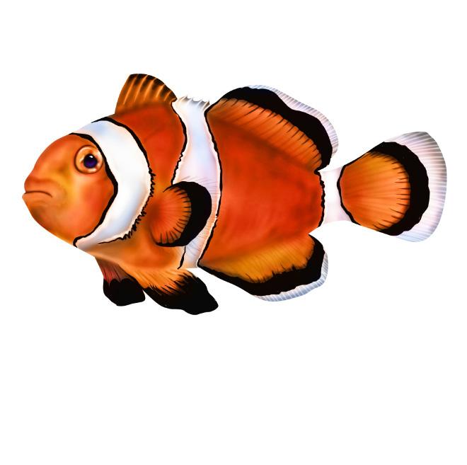 1_Clownfish