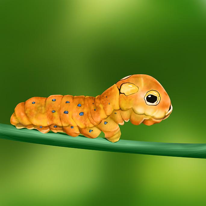 1_Spicebush_Caterpillar_w-Bkgrd