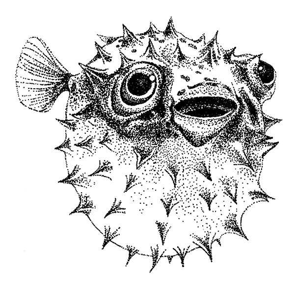 BW_Blowfish
