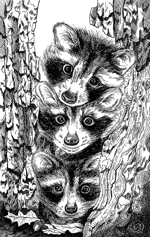 BW_Raccoons