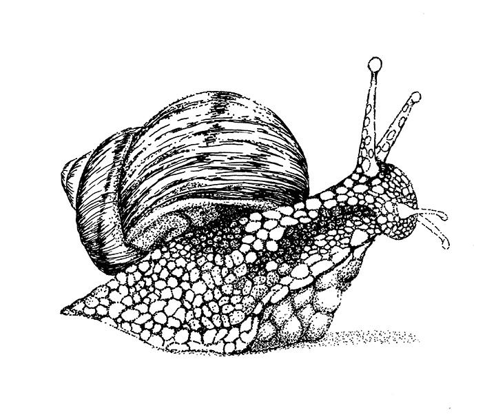BW_Snail
