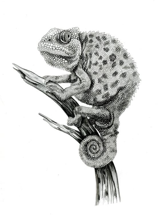 Graphite_Chameleon