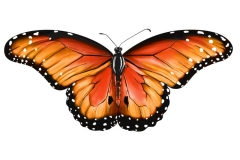 1_Monarch_Butterfly