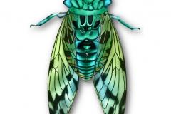 3_Cicada
