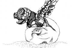 BW_Loggerhead_Hatching