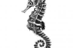 SeaHorse_DigitalInk